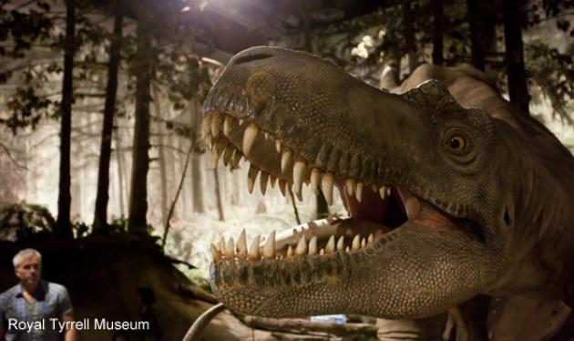 Fossil hunting in Dinosaur Provincial Park