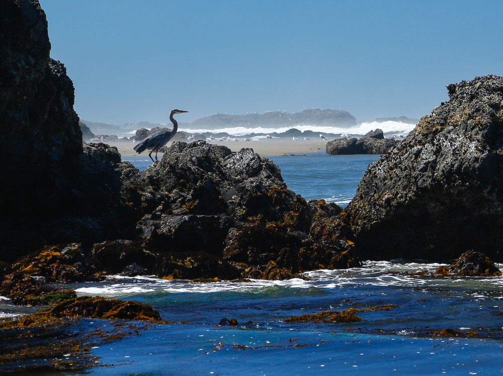 Kissed by the Coast: Exploring Oregon