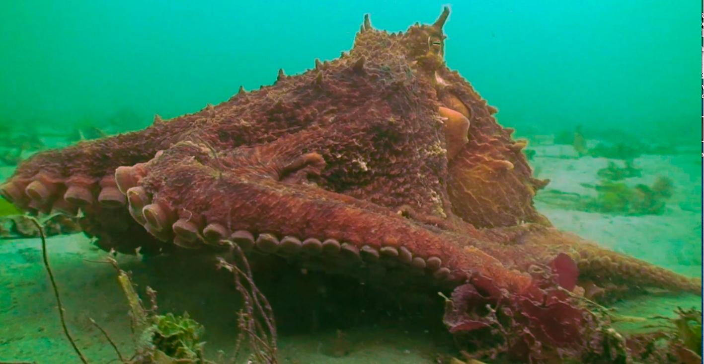 Secrets of the Emerald Sea Video